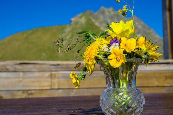 Blumen vor Ifinger-03264